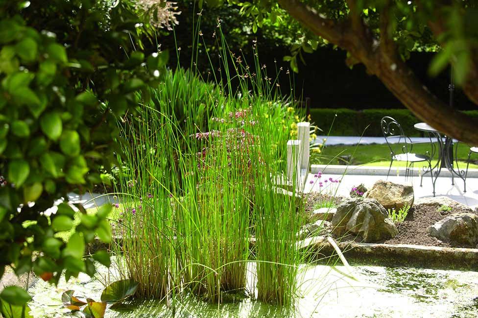 garden-reeds
